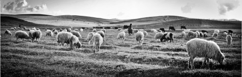 Sheep in a valley